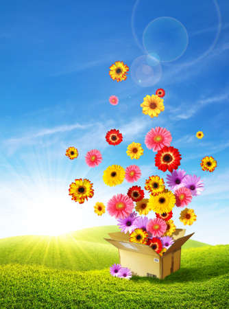 Photo pour Colorful flowers emerging from a cardboard box delivering spring over the green hills - image libre de droit