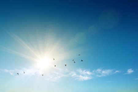 Foto de Sun shining and birds flying over a heavenly blue sky - Imagen libre de derechos