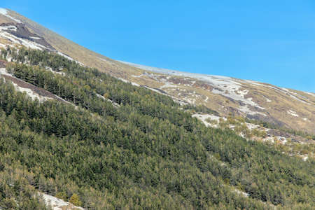 Photo for green forest on mount etna - Royalty Free Image