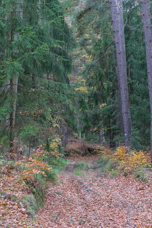 Photo for colorfull trees in the forest in fall - Royalty Free Image