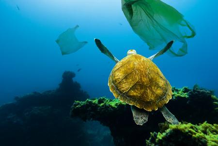 Foto de Underwater turtle floating among plastic bags. Concept of pollution of water environment. - Imagen libre de derechos