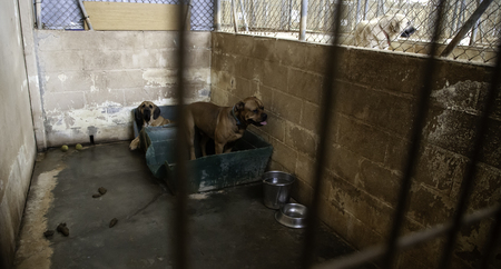 Foto de Dog in enclosed kennel, abandoned animals, abuse - Imagen libre de derechos