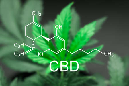 Photo for A sheet of cannabis marijuana in the defocus with the image of the formula CBD - Royalty Free Image