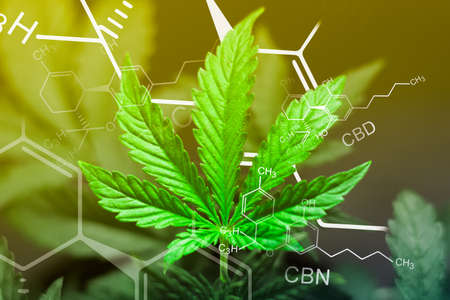 Photo pour A beautiful sheet of cannabis marijuana in the defocus with the image of the formula THC CBD CBN abstract With exposure - image libre de droit