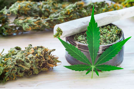 Photo pour Sticky buds of marijuana flowers with cannabis trihoma, cannabis leaf, the concept of medical use THC and CBD - image libre de droit