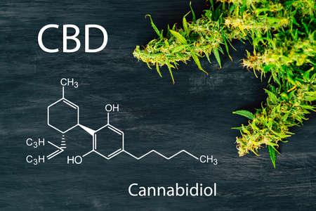 Photo pour A beautiful sheet of cannabis marijuana in the defocus with image of the formula THC - image libre de droit