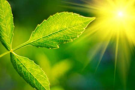 Foto de Fresh green leaf highlighted by sun. - Imagen libre de derechos