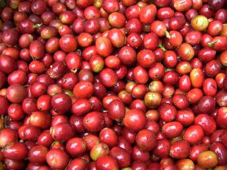 Photo pour Mature coffee - image libre de droit