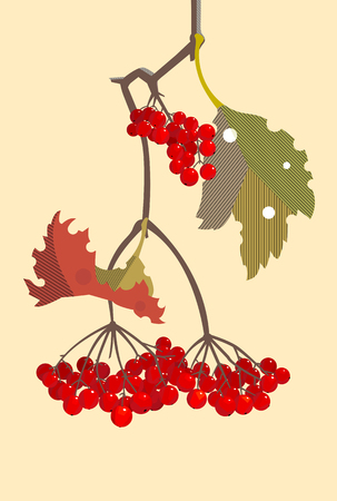 Illustration for A branch of red viburnum in the fall, minimalist style - Royalty Free Image