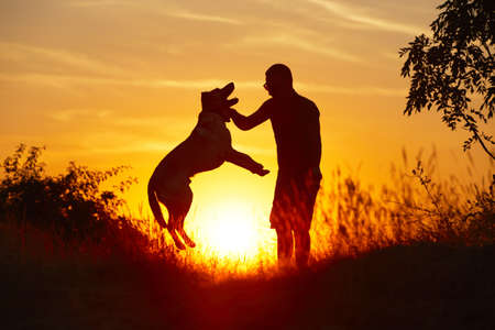 Young man with his yellow labrador retriever in nature - back lit
