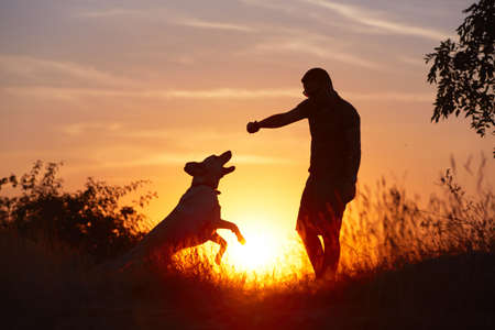 Foto de Young man with his yellow labrador retriever in nature - back lit - Imagen libre de derechos