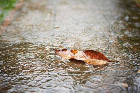 Heavy rain - fallen leaf on the sidewalk
