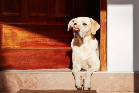 Photo for Dog is waiting in door of house. - Royalty Free Image