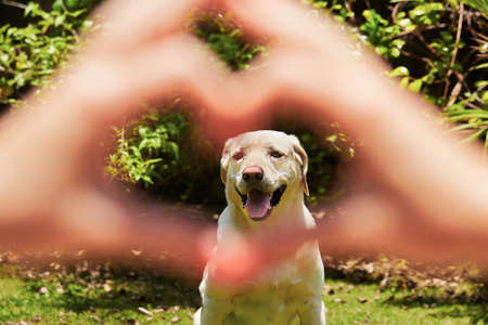 Photo pour Young woman is making heart shape with her dog. - image libre de droit