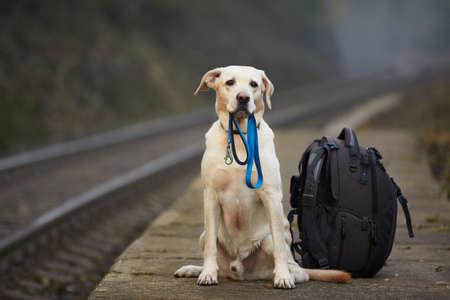 Photo pour Dog is waiting for the owner on the railway platform - image libre de droit