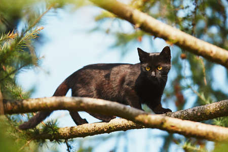 Photo pour Curious cat in the garden. Black kitten with yellow eyes climbing up to tree. - image libre de droit