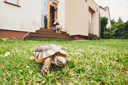 Photo for Life with domestic animals. Man resting and his turtle walking in grass on the garden. - Royalty Free Image