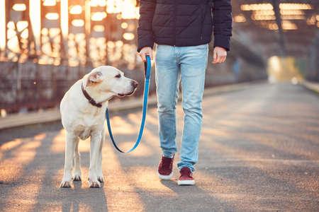 Foto de Morning walk with dog. Young man with his labrador retriever on the iron bridge at the sunrise. - Imagen libre de derechos