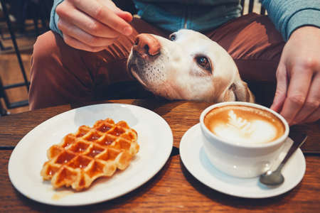 Photo pour Young man with labrador retriever in the cafe. Curious dog under the table with sweet waffles and coffee.  - image libre de droit