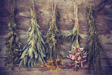 Photo for Vintage stylized photo of bunches of healing herbs on wooden wall, herbal medicine. - Royalty Free Image