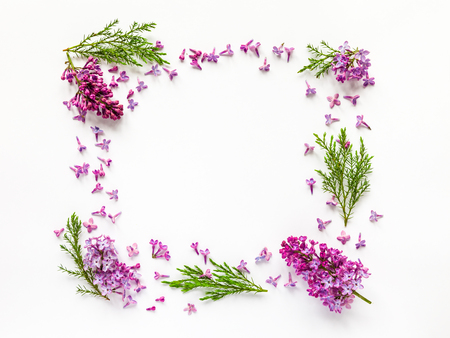 Photo for Floral border of fresh lilac flowers and juniper twigs on white. Flat lay, top view. - Royalty Free Image