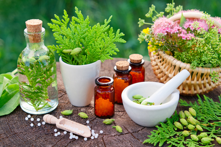 Photo for Bottles of homeopathic globules. Thuja, Plantain, healthy infusion, mortar and basket of herbs. Homeopathy medicine. - Royalty Free Image