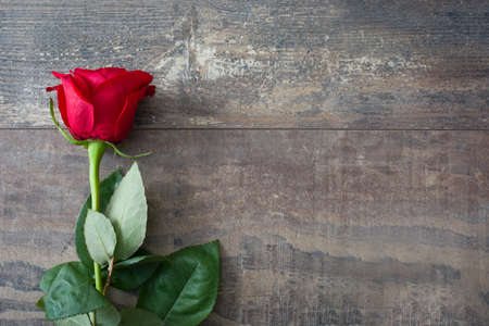 Photo for Valentine rose - Royalty Free Image