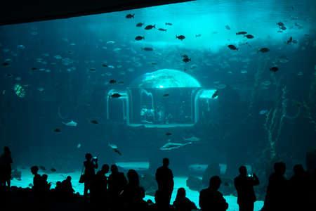 Foto de People watching fishes in aquarium. Gran Canaria Spain. May 2018. Poem of the Sea Aquarium. - Imagen libre de derechos