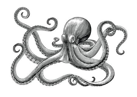 Illustration pour Octopus hand drawing vintage engraving illustration on white backgroud - image libre de droit