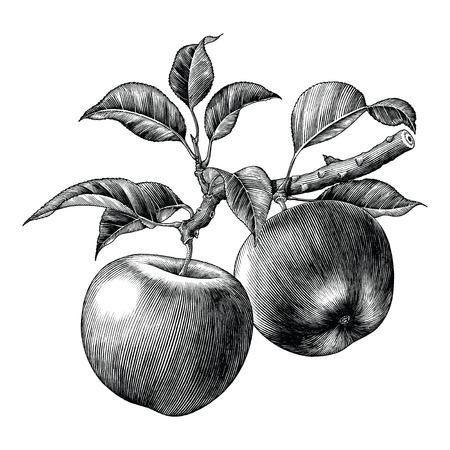 Illustration pour Apple branch hand draw vintage clip art isolated on white background - image libre de droit