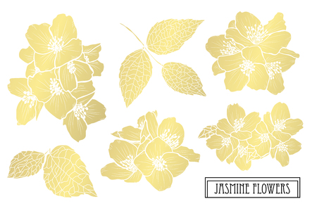 Illustration pour Decorative jasmine  flowers, design elements. Can be used for cards, invitations, banners, posters, print design. Golden flowers - image libre de droit