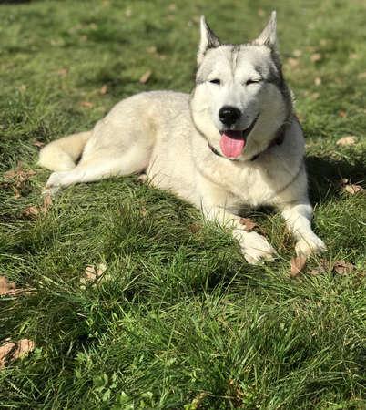 Photo pour smile dog in the garden - image libre de droit