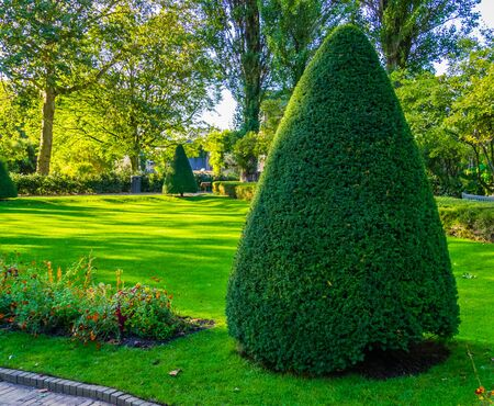 Photo for freshly pruned conifer tree in a beautiful garden, Gardening and upkeep, pruning art - Royalty Free Image