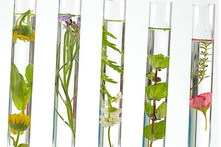 Photo for solution of medicinal plants and flowers - Decorative Objects-flowers on test tubes  - Royalty Free Image