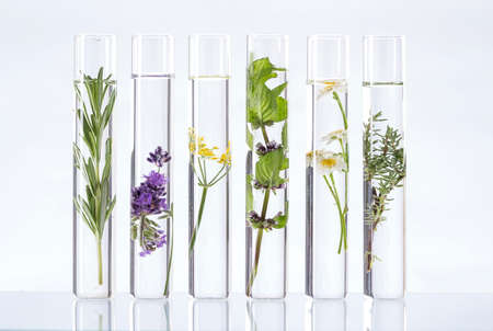 Foto de Scientific Experiment - Flowers and plants in test tubes - Imagen libre de derechos