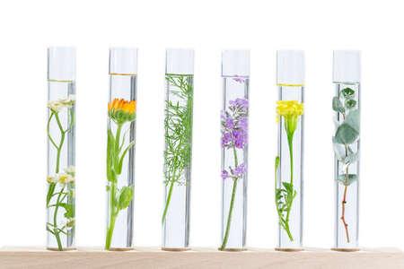 Foto de Scientific Experiment - Flowers and plants in test tubes - Imagen libre de derechos