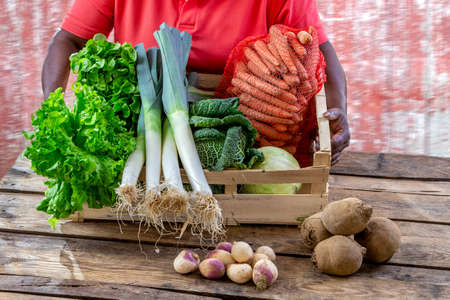 Closeup of woman hands holding a large Fresh vegetableon Display in Crate Local Farmers Markete wooden crate on old brick wall background