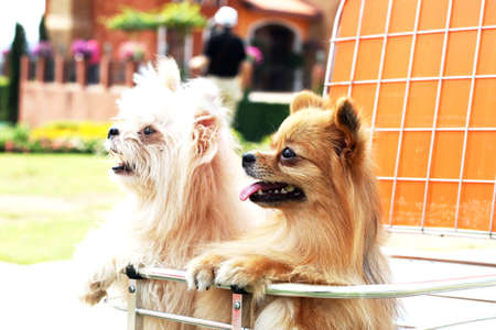 dogs on basket