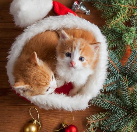Foto de ginger kitten in santa hat against the background of a Christmas tree - Imagen libre de derechos