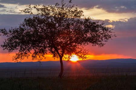 Foto de Lonely tree at sunrise in a meadow - Imagen libre de derechos