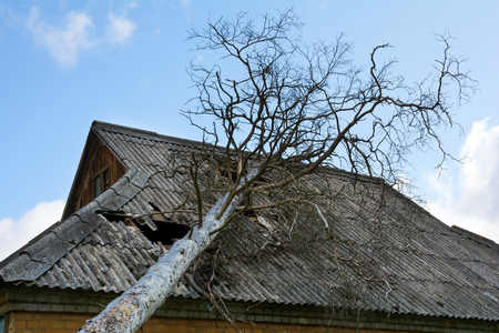 Photo pour Old dry pine that fell on the abandoned house with asbestos roof. - image libre de droit