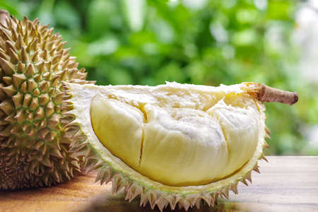 Photo pour Custardy pale yellow flesh inside spiky husk of durian the popular fruit with strong odour native in Southeast Asia on wood table with green bokeh blurred background. - image libre de droit