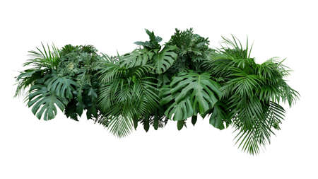 Photo for Tropical leaves foliage plant bush floral arrangement nature backdrop isolated on white background, clipping path included. - Royalty Free Image