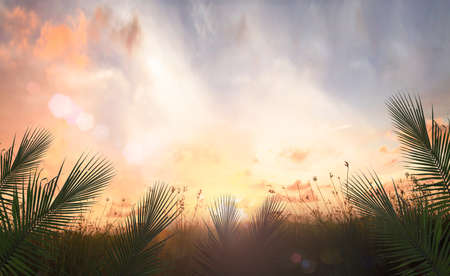 Photo pour Palm Sunday concept: Palm leaves over meadow sunset background - image libre de droit