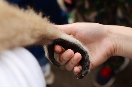 Monkey and human handshake