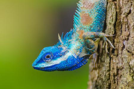 Foto de Chameleon on the tree - Imagen libre de derechos