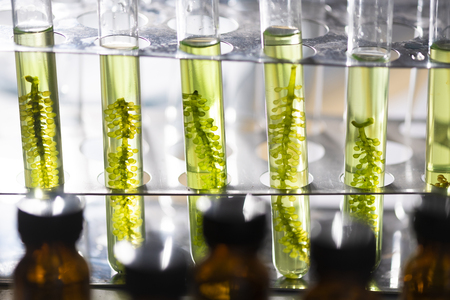 Photo pour Photobioreactor in lab algae fuel biofuel industry, Algae fuel, Algae research in industrial laboratories - image libre de droit