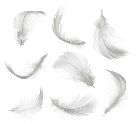 Foto de Collection of white feather isolated on white background - Imagen libre de derechos