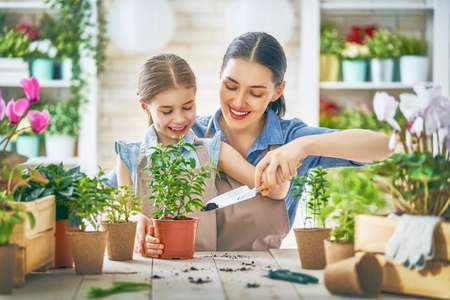 Foto de Cute child girl helping her mother to care for plants. Mom and her daughter engaging in gardening near window at home. Happy family in spring day.                           - Imagen libre de derechos