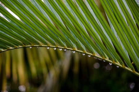 Photo pour Leaf of a Palm - image libre de droit